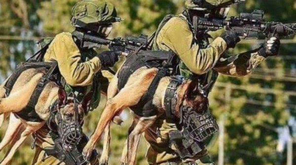 holstered attack dogs