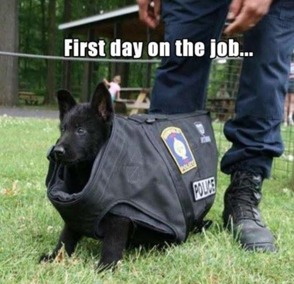police dog first day on the job