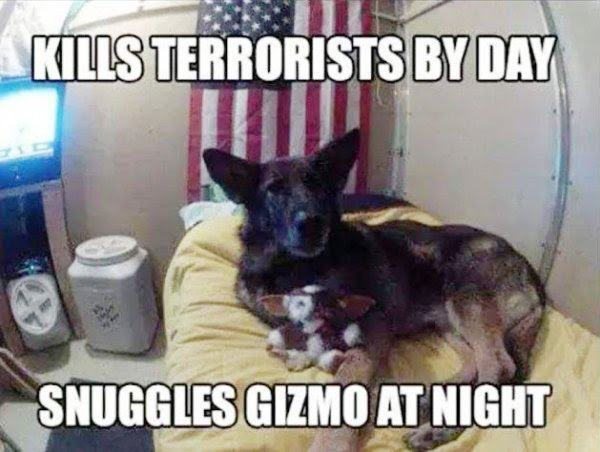 kills terrorists by day snuggles gizmo at night