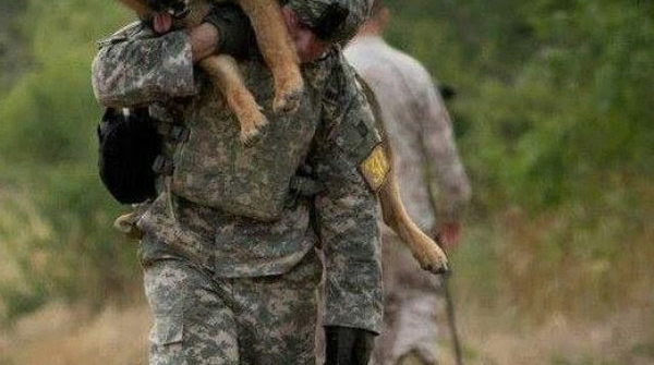 he's not just a dog he's a soldier