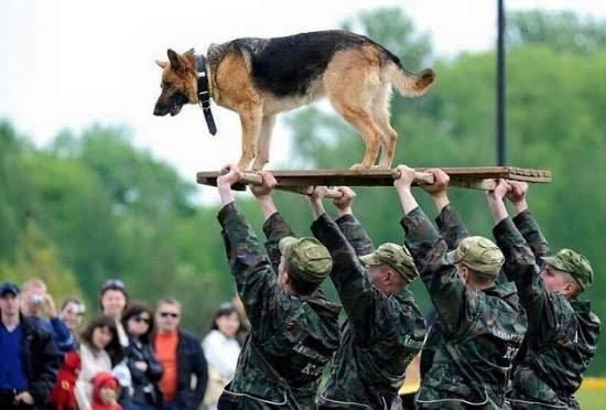military dog high on board hip hip hooray