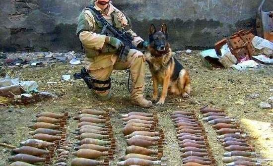 dog soldier bombs all in a day's work