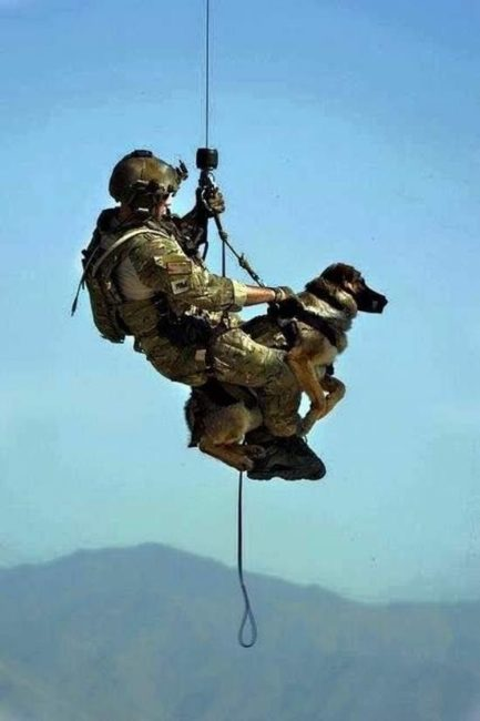 soldier dog drop in