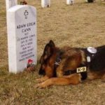 adam leigh cann usmc dog mourning at grave