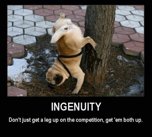 ingenuity dog funny dog pic