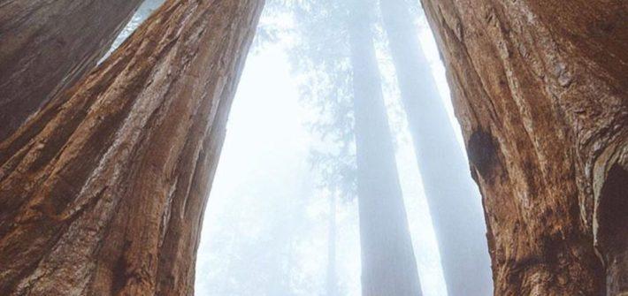 Sequoia National Park Amazing