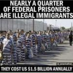illegal immigrants costs