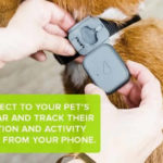whistle 3 dog gps tracker