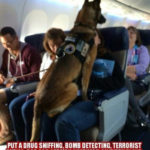 put a drug sniffing, bomb detecting dog on every plane