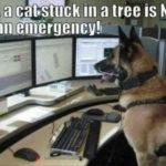 a cat stuck in a tree is not an emergency