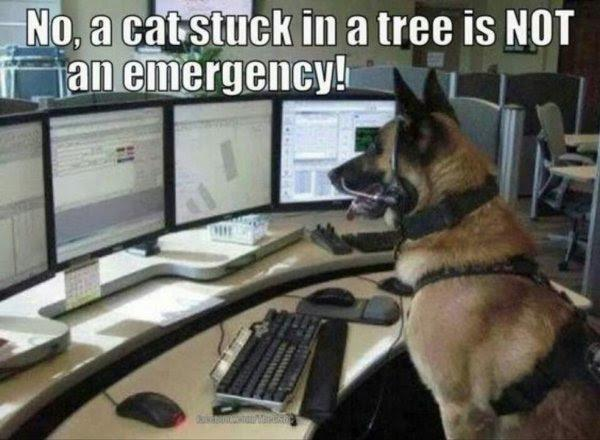 a cat stuck in a tree is not an emergency