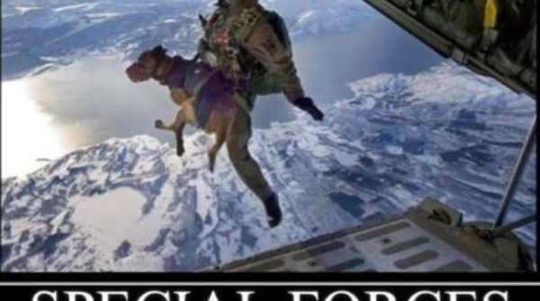 special forces dog jumping out of plane