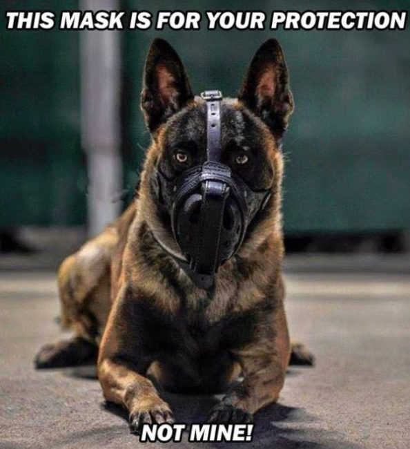 the mask is for your protection not mine