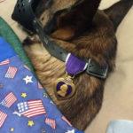 rocky purple heart dog
