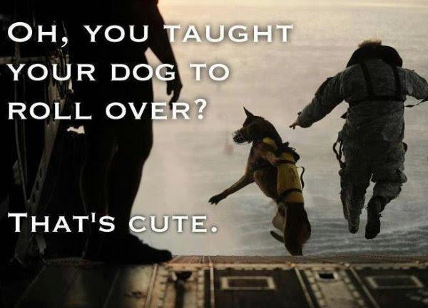 you taught your dog to roll over? that's cute