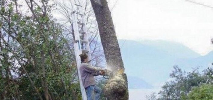 funny picture of guy cutting down a tree