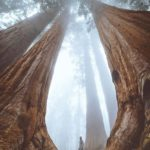 Sequoia National Park Amazing