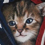 cat and american flag t-shirt cat lady t-shirts