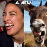 AOC Donkey