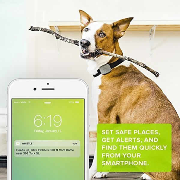 whistle 3 dog gps tracker